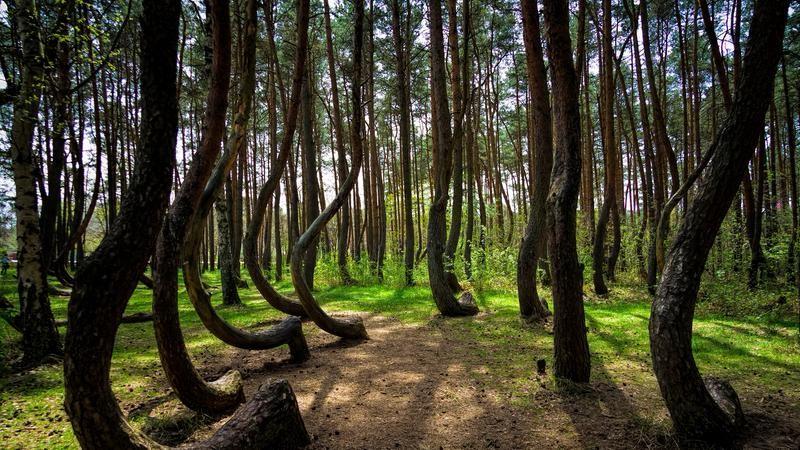 Destinations terrifiantes Forêt hantée d'Hoia-Baciu